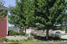Trees and Shrubs  - Articles & Resources from Nebraska Extension in Lancaster County