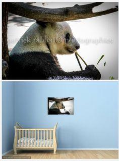 Panda Photo Fine Art Photography Animal Photography San Diego Zoo Animal Lover Kids Room Wall Art Nature Cute Panda Eating