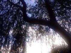Market Dashboard - #tree #trees #nature #naturephotography #photography #brittphotog #eyeem #eyeemmarket #stockimages #eyeemcollection #sun #sunny #stockphotography #buy #sell #seller #photos #onsale