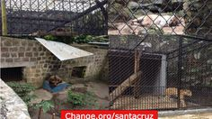 Build a dignified place for the cats and the bear of this zoo, with space so they do not have so much stress.