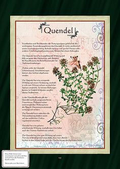Quendel Three Little Birds, This Little Piggy, Healing Herbs, Fantastic Art, Medicinal Plants, Aquaponics, Herbal Medicine, Botanical Illustration, Garden Plants