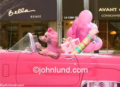 Stock photo by John Lund. I can so see my toy poodle dreaming of this while sleeping beside me in the car.
