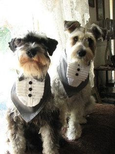 Dog Wedding Accessories-Tuxedos When you love your dog It goes without saying that your fur baby is going to play a big part on your big day Your Wedding .Ideas for you here. Lgbt Wedding, Tuxedo Wedding, Dog Wedding, Friend Wedding, Wedding Groom, Dream Wedding, Wedding Tuxedos, Wedding Ideas, Bride Groom