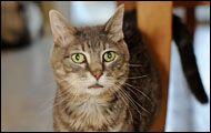 Pet Photography Cat