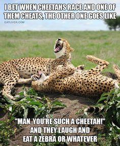 When Cheetahs Race…