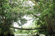 Magical Root Bridge Padang, West Sumatra, Indonesia by Yoppy Pieter (Prabu Klana Swadana)