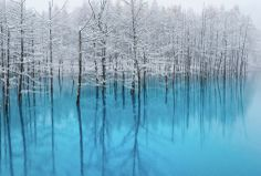 """Hokkaido Japan : """"A blue pond""""   The name of a pond in Biei-town.It was used by the promotion of Apple inc., and become famous."""