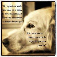 Frases De Amor A Los Perros Mi Corazon Amor Perruno