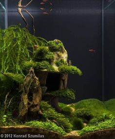 nano aquarium by Konrad Szumilas Great work in a small space. Lovely fissidens and cool depth effect!