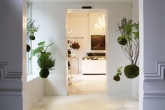 Boxy Fine Foods Take Away Catering, Ghent, plants 2