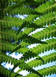 fractals in nature - Bing Images