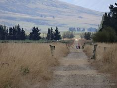 The last km before the end of the Otago Central Rail Trail at Middlemarch. Central Otago, New Zealand, Cycling, Trail, Country Roads, Tours, Mountains, Summer, Summer Time