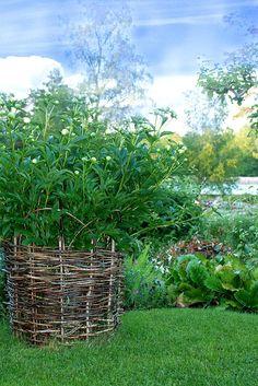 Garden Organization, Victory Garden, White Flowers, Grow Food, Plants, Gardens, Dreams, Inspiration, Tips