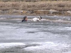 """Un hombre fue captado por una cámara sumergiéndose en un lago congelado para rescatar a su perro después de que el animalito cayera en el hielo cuando la superficie cedió y se lo tragó literalmente. La historia completa en: <a href=""""http://www.seamosmasanimales.com/joven-arriesga-su-vida-por-salvar-la-de-su-perro-que-se-ahogaba-en-medio-a-un-lago-congelado-video-viral"""" rel=nofollow…"""