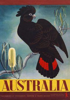 Cockatoo Banksia Australia by Eileen Mayo Australian Vintage Travel Poster Retro Poster, Custom Posters, Vintage Travel Posters, Australian Vintage, Australian Birds, Travel Ads, Travel Images, Vintage Advertisements, Vintage Ads