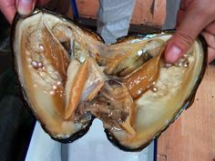 Oysters with Pearls in Them | The Not-So-Glamorous Side of Pearls | Liter(ality)