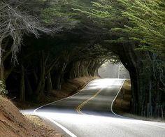 Tree Tunnel, Highway 1,  Mendocino, California photo via susana