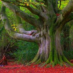 Deep in the forest where many secrets and mysteries dwell. Native American Proverb, Shady Tree, Time In The World, Magic Forest, Tree Art, Natural Wonders, Horticulture, Natural World, Beautiful Places
