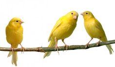 Yellow! Yellow! Yellow!