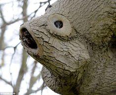 Finding Tree-mo: Strangely shaped oak tree in  InEx Garden Centre in Goffs Oak, Hertfordshire. Uk
