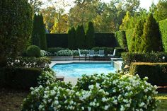 LOve, LOve, Love! Boxwood hedge, white impatiens, and a POOL in my backyard!!!