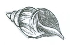 seashell pencil drawings - Google Search