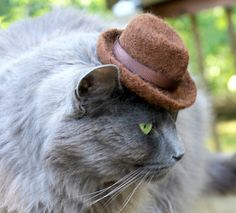 Fedora Cat Hat - Hand Felted Wool Hat. $57.00, via Etsy. For Fitz, because he's a hipster @Bridget Rumble