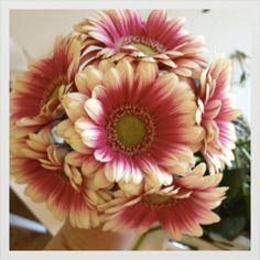 http://www.weddingland.fr/article-vite-un-petit-bouquet-a-petit-prix-pour-mes-bridesmaids-107374157.html#