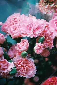 How To Select Little One Dresses Carnations I Can Almost Smell The Sweet Smell They Fill The House With. My Flower, Flower Power, Red Rose Bouquet, Flower Phone Wallpaper, Pink Carnations, Pink Flowers, Cottage Garden Plants, Birth Flowers, Nature