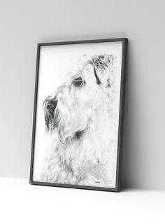 Irish Soft Coated Wheaten Terrier poster from WeLoveDogs #iscwt #poster #homedecor #welovedogs #wheatenterrier