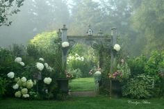 Lovely garden in morning mist.