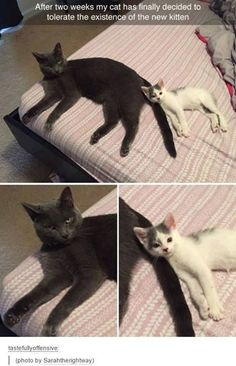 Cute Little Animals, Cute Funny Animals, Funny Cute, Cute Cats, Hilarious, Adorable Kittens, Funny Animal Memes, Funny Animal Pictures, Funny Dogs