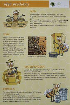 Den Země - včely, projekt Člověk a jeho svět (CZ.1.07/1.1.32/01.0034) - ZŠ Jesenice, okr. Rakovník Science And Nature, Montessori, Children, Kids, Fairy Tales, Homeschool, Bee, Teacher, Education
