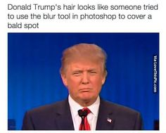 What Donald Trump's Hair Looks Like funny lol humor funny pictures funny photos funny images hilarious pictures donald trump political humor