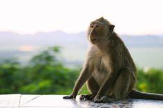 Bali Indonesia - Life Abundant Blog, Best places to visit in Bali, Bali Indonesia Blog, Best of Bali, Bali Beaches, Bali, Uluwatu Temple, Bali monkey