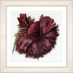 Vintage Botanical No. 51W by Zhee Singer Framed Giclee Print Fine Wall Art