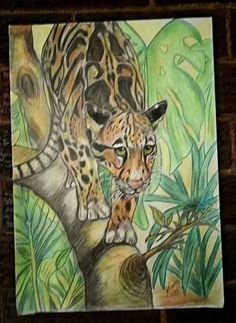colour pencil...drawing...tiger by Amanda Coertze 2017