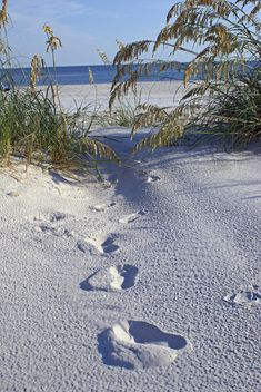ღღ Dauphin Island, Alabama - One Small Step for Man . . . by baxwrtr