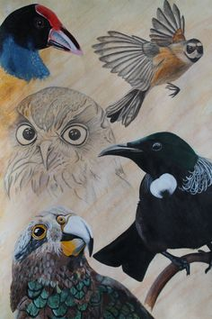 Logan Moffat, 15.  Birds of New Zealand.    Materials-  water colour, pencil and…