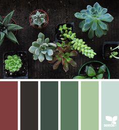 Succulent Hues - http://www.design-seeds.com/succulents/succulent-hues-7