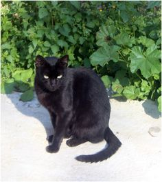 A black cat in my neighbourhood