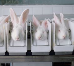"Estée Lauder, Mary Kay, Avon Resume Testing on Live Animals. There is no need for this cruelty. Please stop buying products that are tested on animals. Look for the bunny symbol or ""not tested on animals"" on the label - it takes 2 seconds and you spare an animal a life of suffering and send a message to companies that continue to test."