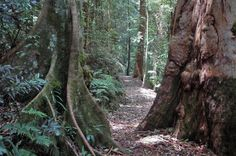 Greenes Falls Circuit Mt Glorious   Brisbane Walks   Must do Brisbane
