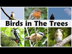 I have produced hundreds of wildlife videos showing off the rare birds and the not so rare birds, plus videos of the most spectacular places to visit in Beau. Sounds Of Birds, Nature Sounds, Green Woodpecker, Robin Bird, Backyard Birds, In The Tree, Singing, Buzzard