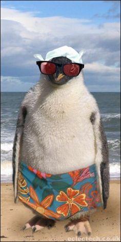 Summer Penguin!