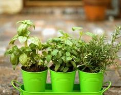 House Plants, I'm going to do this with herbs