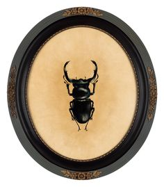"""Lucanus Cervus""• oil painting • bug painting • vintage frame • contemporary art 46x53cm • fine art • figurative art • . #artwork #blackbug #visualart Amazing Paintings, Amazing Art, Vintage Frames, Vintage Art, Botanical Art, Animal Paintings, Figurative Art, Love Art, Contemporary Artists"