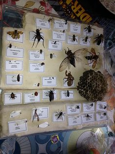 Our First Bug Box, 39 Insects Collected and Pinned by my kids... a great no cost, low cost family hobby!