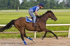 Training a race horse    location: Virginia  photographer: Susan M. Carter  IMG_5618     Horse Training Secrets Revealed