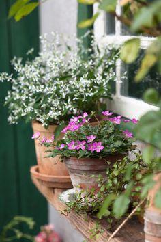 Garden Landscaping With Stones .Garden Landscaping With Stones Garden Spaces, Garden Pots, Fence Garden, Container Plants, Container Gardening, Gardening Vegetables, Beautiful Gardens, Beautiful Flowers, Cottage Garden Design